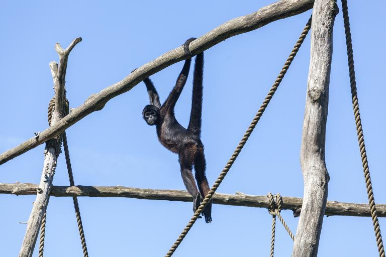 Dyrepresentasjon: Lemurer og ekornaper